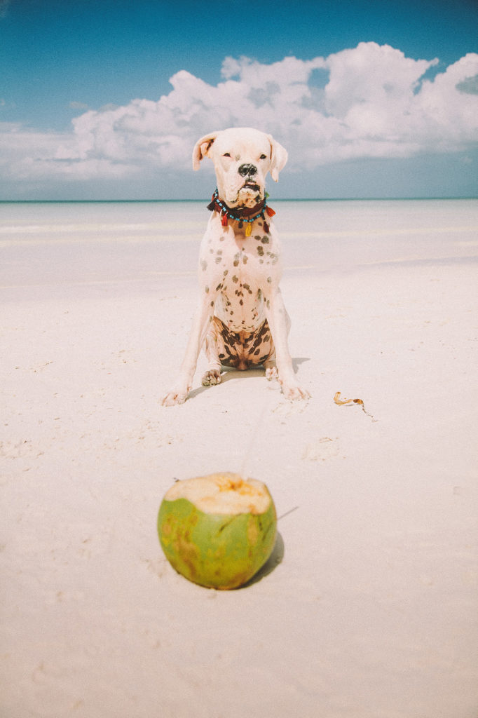 marimba vacationing from being a tulum photographer in holbox island